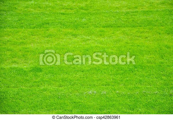 Fresh spring green grass background - csp42863961