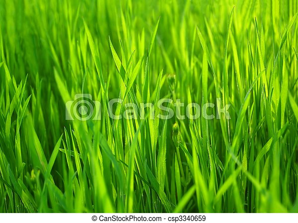 Fresh Spring Green Grass. Natural Grass Background - csp3340659