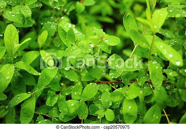 Fresh spring green grass  - csp20570975