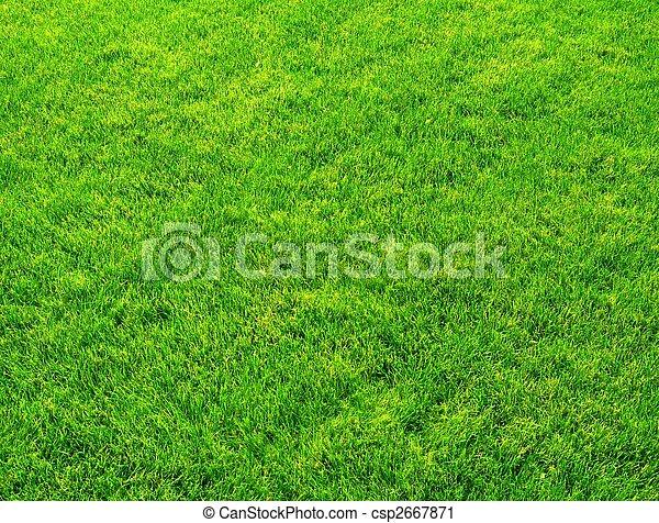 Fresh spring green grass - csp2667871