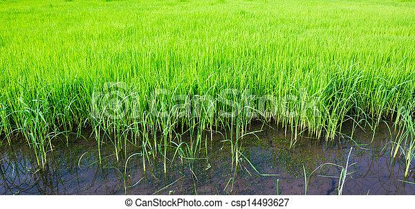 Fresh spring green grass - csp14493627