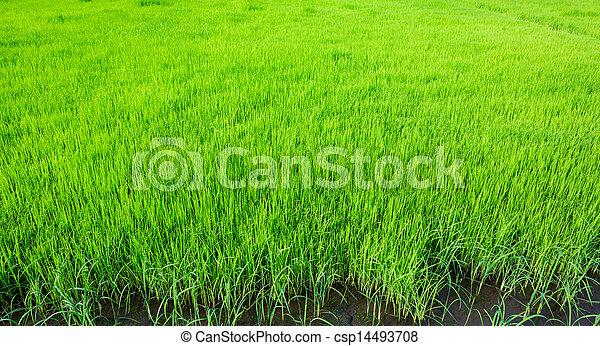 Fresh spring green grass - csp14493708