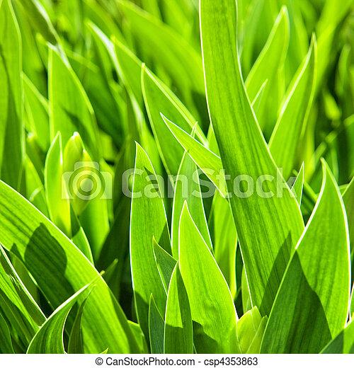 Fresh spring green grass. - csp4353863