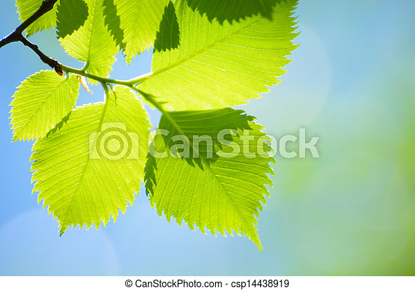 Fresh Spring Green Leaves Over Bright Background - csp14438919