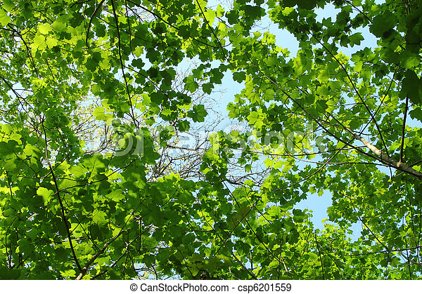 Fresh Spring Green Tree Leaves Canopy In A Forest.. Stock Photo & Fresh spring green tree leaves canopy in a forest.. stock ...