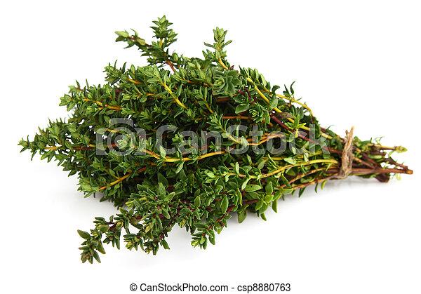 Fresh thyme - csp8880763