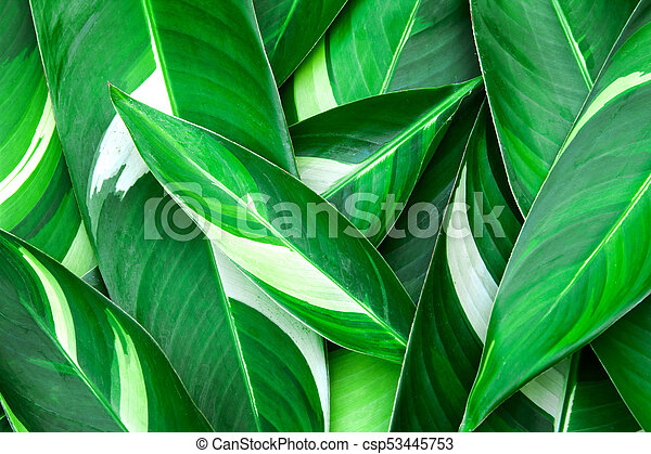 Fresh Tropical Green Leaves Background Canstock Choose from 20+ green tropical leaves graphic resources and download in the form of png, eps, ai or psd. can stock photo