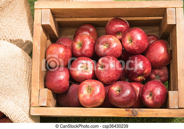 fresh usa apple in a wooden box - csp36430239