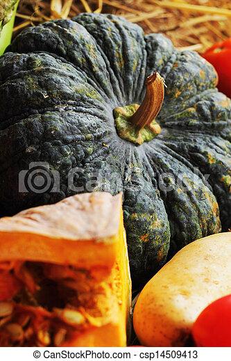 Fresh vegetables - csp14509413