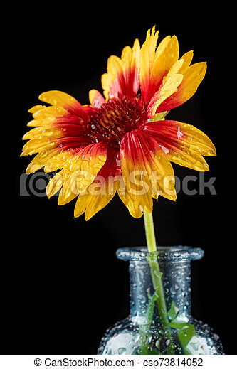 Fresh Wild Flowers In A Glass Vase On A Dark Table Beautiful Colorful Flower Bouquet Black Background Canstock