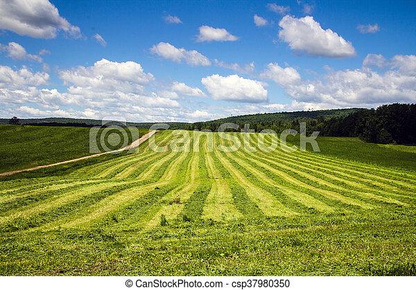 freshly cut hay field - csp37980350