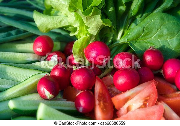 Freshly harvested home grown vegetables. Growing organic vegetab - csp66686559