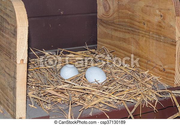 Freshly laid chicken eggs - csp37130189