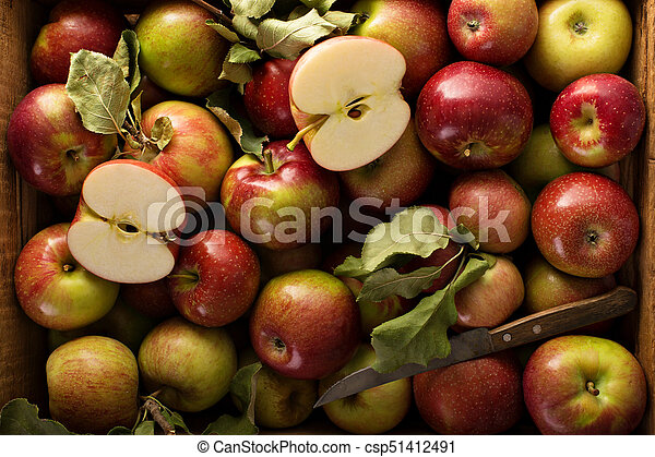 Freshly picked apples in a wooden crate - csp51412491
