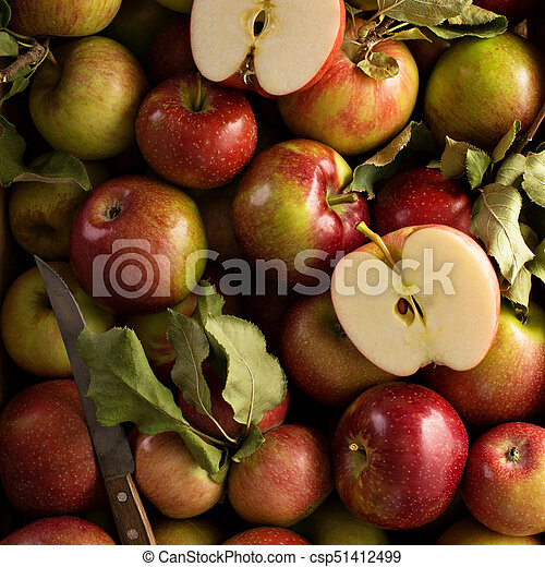 Freshly picked apples in a wooden crate - csp51412499