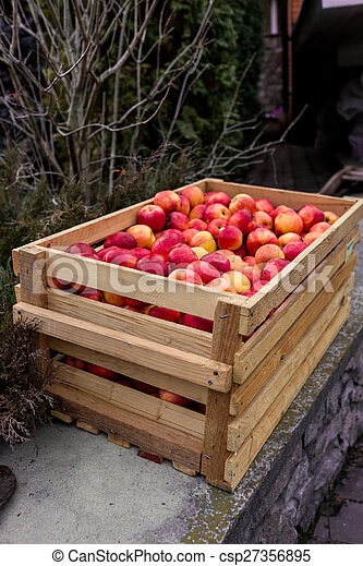 Freshly picked red apples in wooden crate - csp27356895