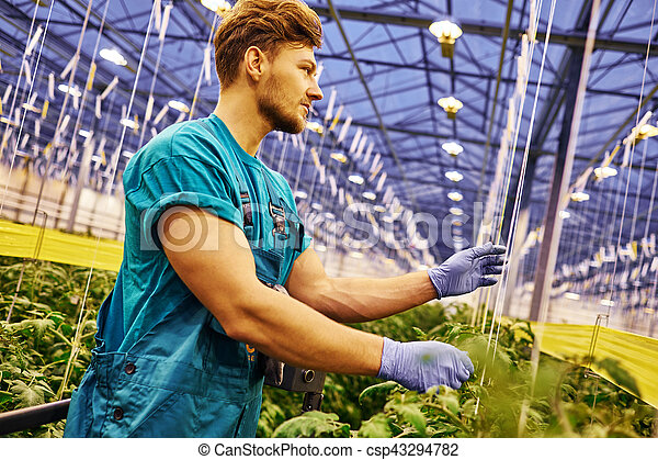 Friendly farmer working on hydraulic scissors lift platform in greenhouse - csp43294782