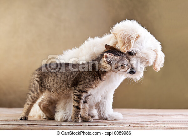Friends - dog and cat together - csp10089986