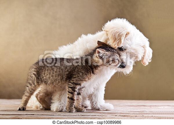 Freunde - Hund und Katze zusammen - csp10089986