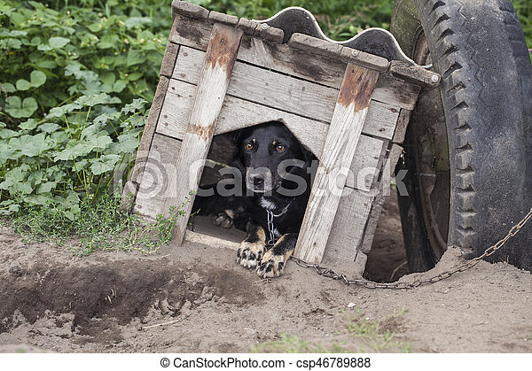 frightened dog sitting in the kennel - csp46789888