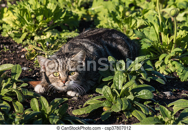 frightened tabby cat - csp37807012