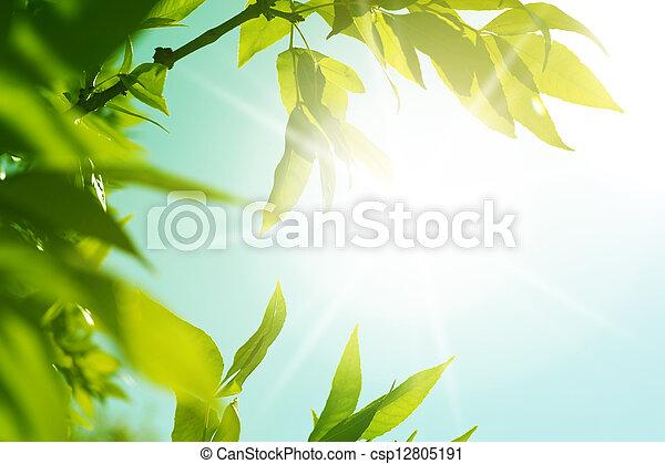fris, bladeren, groene, gloeiend, nieuw - csp12805191
