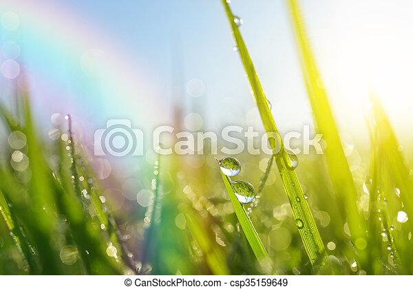 fris, druppels, groen gras, dauw - csp35159649