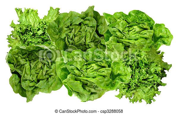 fris, lettuce!, groene - csp3288058