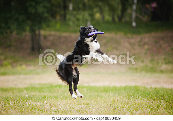 Frisbee dog catching disc - csp10830459
