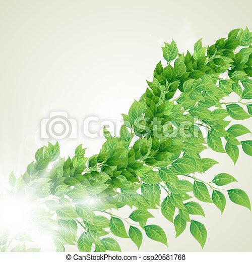 Zweig mit frischen grünen Blättern - csp20581768
