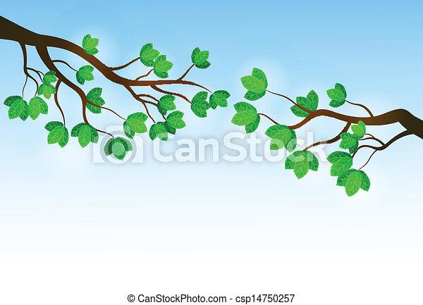 Zweig mit frischen grünen Blättern - csp14750257