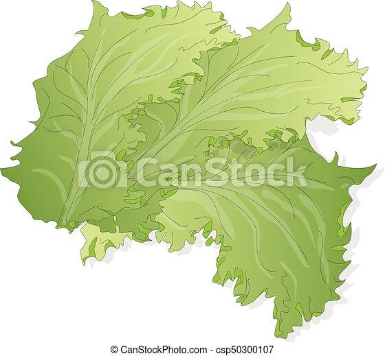 Frisch Blätter Grüner Salat Kopfsalat