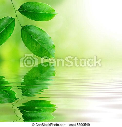 friss, zöld, zöld háttér - csp15390549