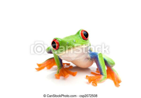 frog closeup on white - csp2072508