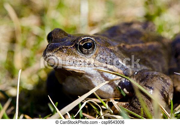 Frog eye macro closeup of wet amphibian animal  - csp9543006