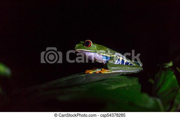 Frog in Costa Rica - csp54378285