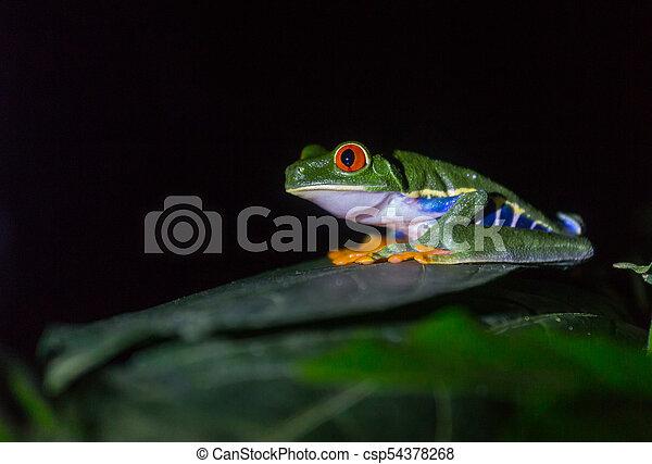 Frog in Costa Rica - csp54378268