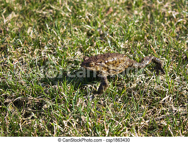 frog in the grass - csp1863430