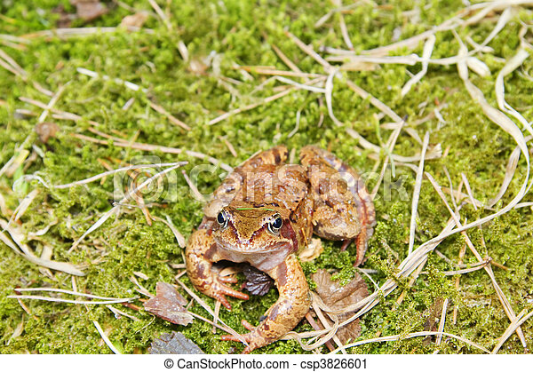Frog in the moss - csp3826601