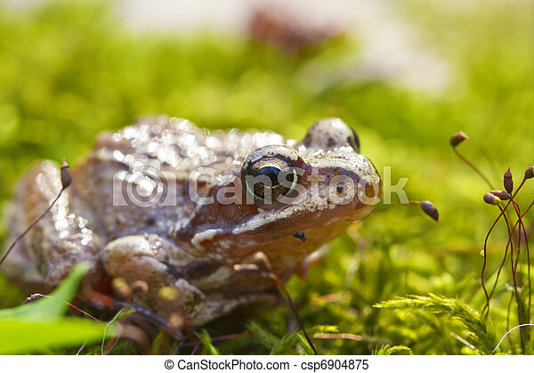 Frog in the moss - csp6904875