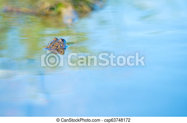 frog in the water - csp63748172