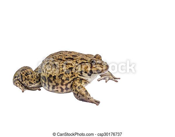 Frog isolate white background - csp30176737