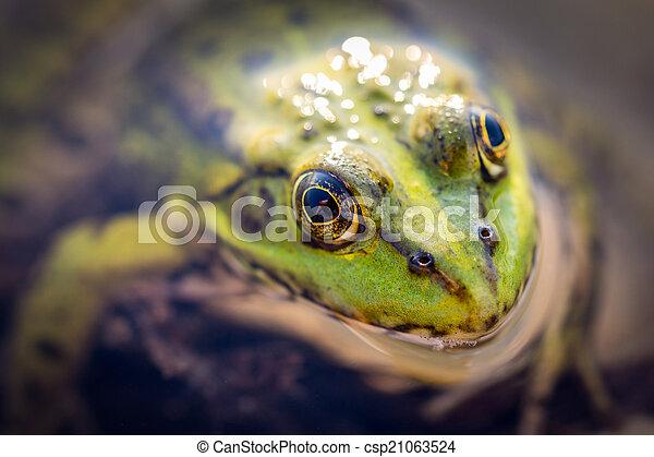 Frog macro - csp21063524