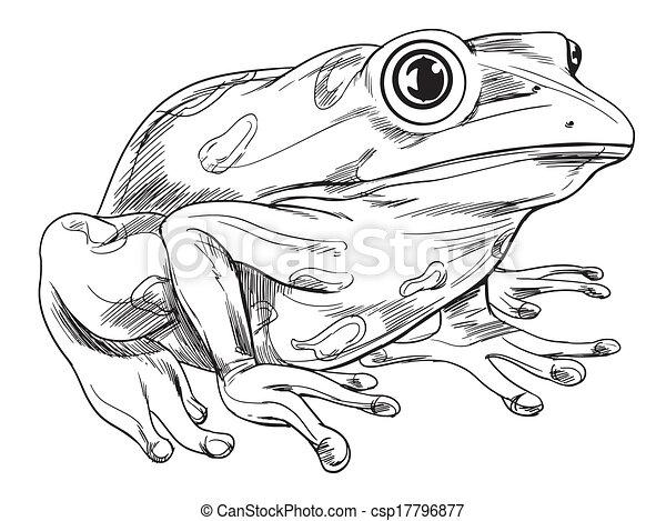 Frog outline - csp17796877