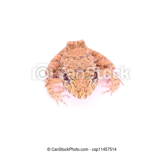 Frog - csp11457514