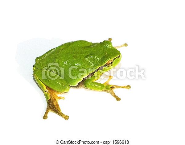frog - csp11596618