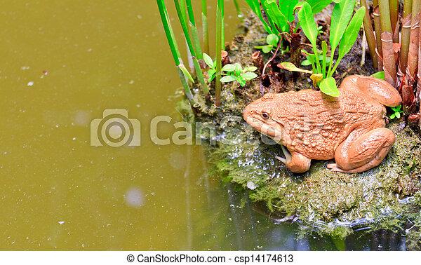 frog - csp14174613