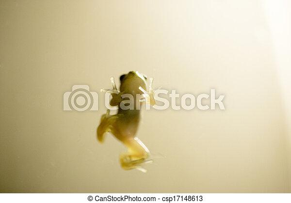 Frog - csp17148613
