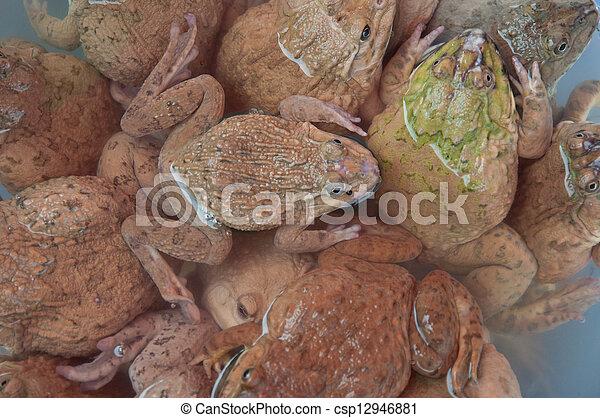 Frog - csp12946881