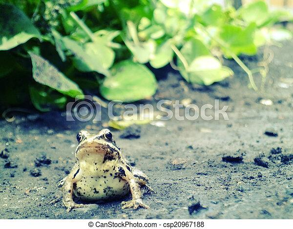 frog - csp20967188